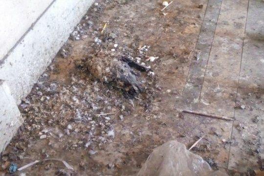 riesgo sanitario en una escuela de la plata: los alumnos conviven con el excremento de palomas