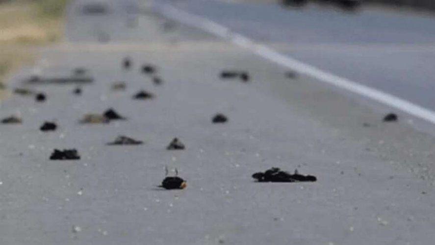 Miles de pájaros fueron encontrados muertos en Nuevo México.