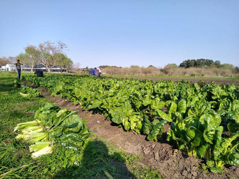 Conocé el proyecto de la UNLP para producir alimentos deshidratados para familias vulneradas