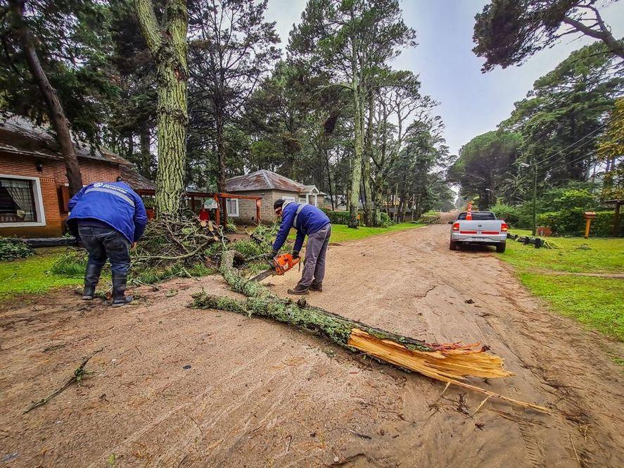 La tormenta en Pinamar provocó caída de árboles por los fuertes vientos. No se reportaron heridos ni víctimas.