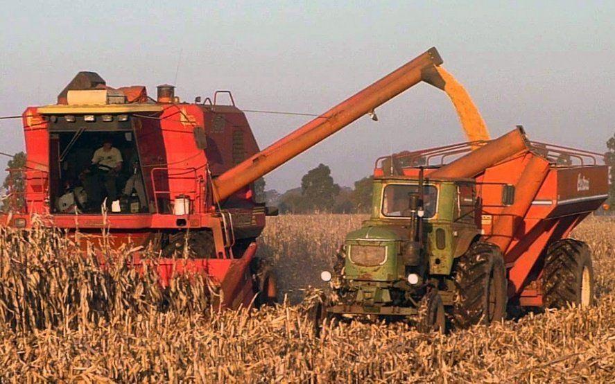 Mientras todas las miradas apuntan a la soja, la cosecha de maíz promete récords de producción