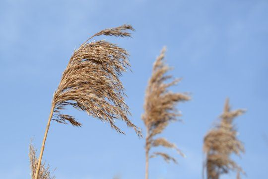 El alerta amarillo por vientos afecta al sur bonaerense