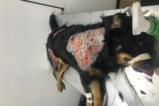 bronca contra una vecina acusada de quemar con aceite caliente a perros
