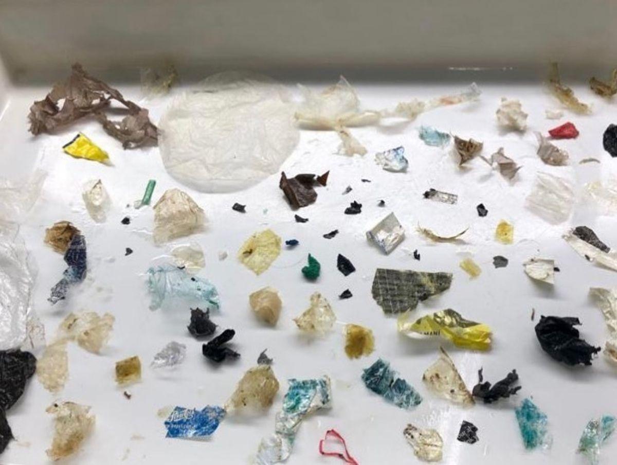 Se constató la presencia de restos plásticos en tortugas marinas