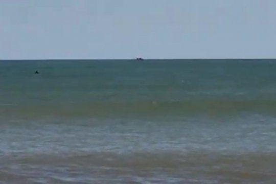 video: turistas alarmados por la aparicion de orcas en una de las playas de mar del plata