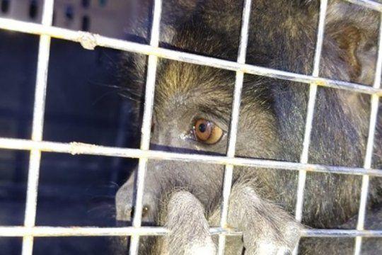 alientan a denunciar trafico ilegal de la fauna silvestre en el territorio bonaerense