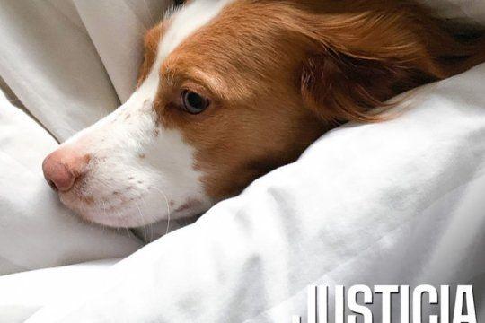 justicia por oli: mataron a su perra en junio y lanzaron una campana para que su caso no quede impune