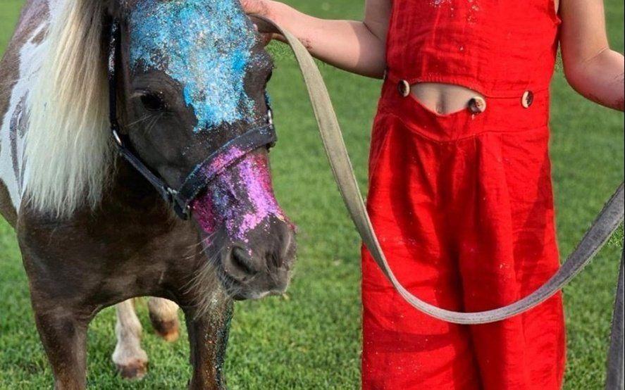 """Ángel de Brito explotó contra una exmodelo que le puso gitter a un caballo: """"¿Por qué no te pintás el culo?"""""""