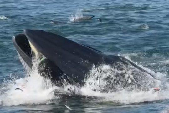 como a pinocho: se lo trago una ballena, pero logro sobrevivir
