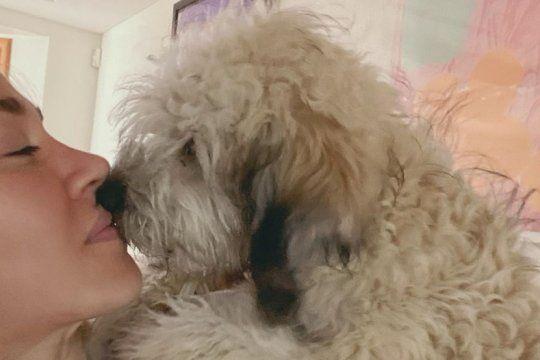 ?casi caniche?: el perro instagramer de daniel osvaldo que se hizo fan de jimena baron