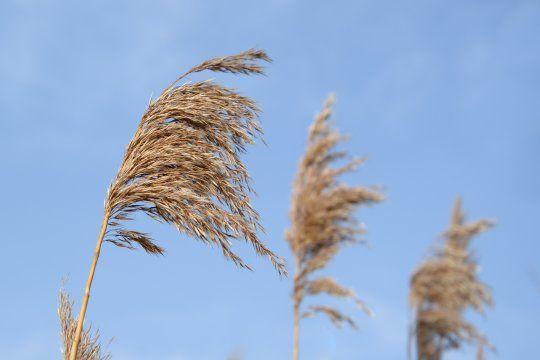 Hay alerta por vientos fuertes con ráfagas en el oeste bonaerense