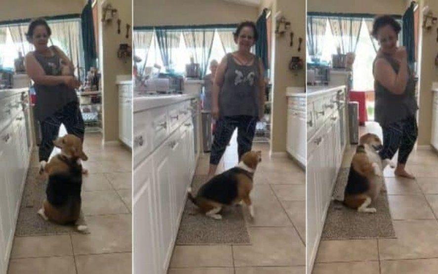 Video: furor por Bailey, el perro que baila reguetón con su dueña al ritmo de Yatra y Daddy Yankee