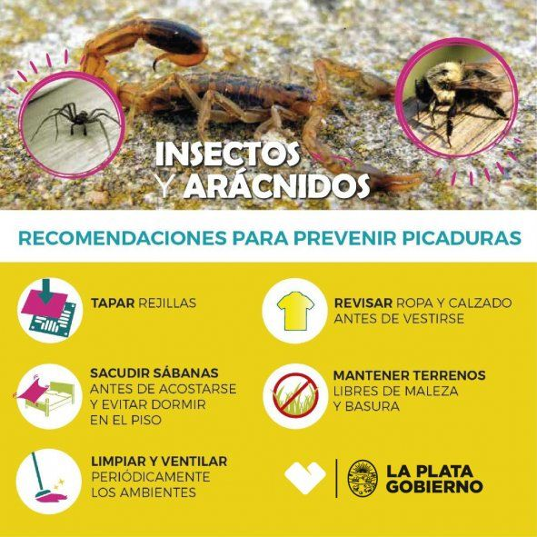 El Municipio de La Plata brindó recomendaciones para prevenir picaduras de alacranes y escorpiones