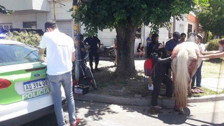 El caballo se lastimó con el carro que cargaba mientras circulaba por las calles de La Plata