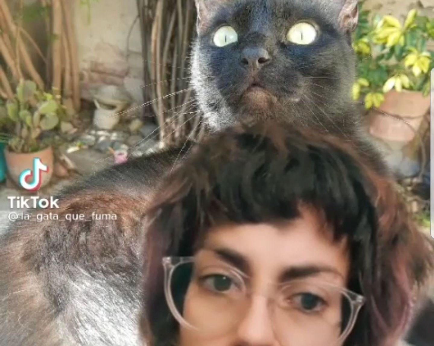 mujer amante de los gatos recompensa al que encuentre a su lucy