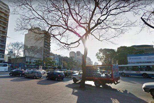 En CABA deberán plantarse 100.000 árboles por año. Así lo dispuso hoy la Legislatura Porteña.