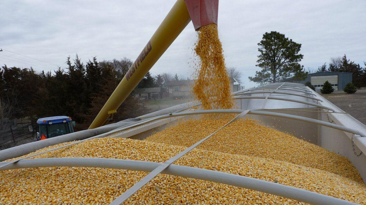 La Mesa de Enlace saltó contra el Gobierno Nacional por las nuevas restricciones a las exportaciones de maíz