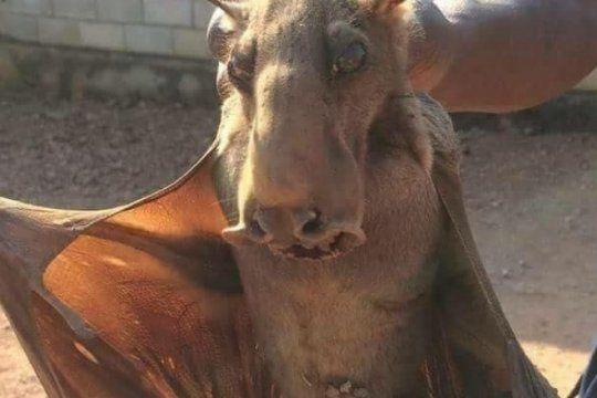 desmentido: el supuesto chupacabras que aterro a los vecinos de pigüe resulto ser un falso viral