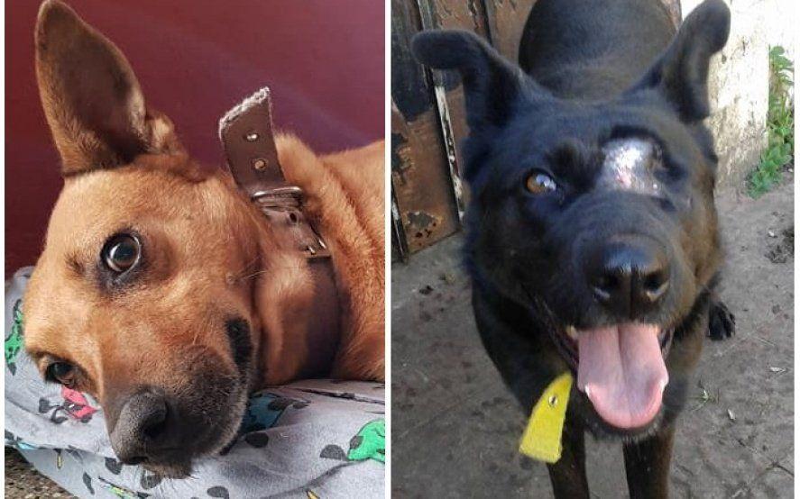 Años de espera: la historia de Sol y Osa, dos perras rescatadas del abandono que sueñan con una familia