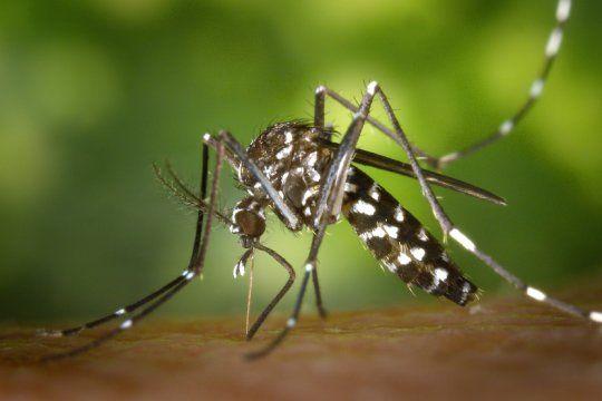 dengue: en lo que va del ano, cerca de 2 mil bonaerenses contrajeron la enfermedad y hubo 4 fallecidos