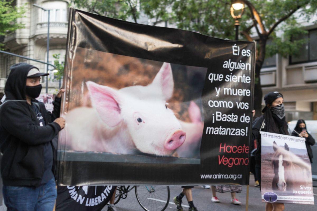 La marcha tendrá lugar el 1° de noviembre en Plaza de Mayo (Foto: Ánima)