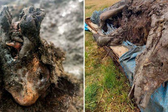 Increíble hallazgo: descubrieron un oso de las cavernas de la Edad de Hielo