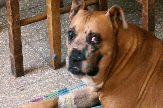 Piden ayuda para el perro que evitó un robo en La Plata