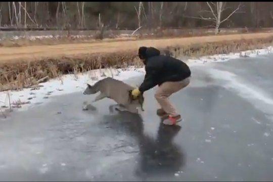 Momento final del rescate de la cierva en el hielo del lago congelado