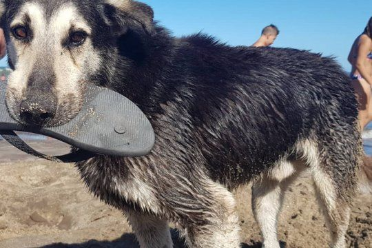 Roba Ojotas, el perro viral que conquistó a los turistas de Santa Clara