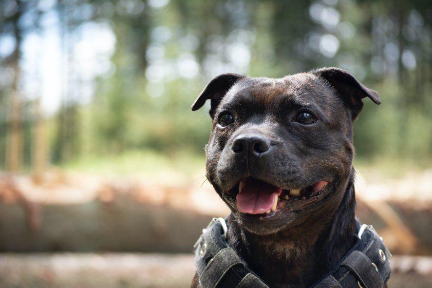 Los perros potencialmente peligrosos deberán ser inscriptos en el registro