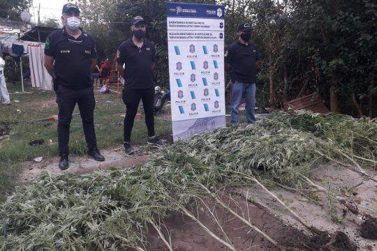 Una fuente policial aseguró que se incautó marihuana por 500.000 pesos