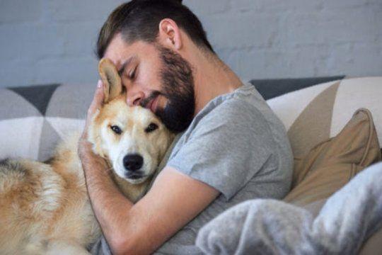 terapia con mascotas: para aliviar el estres, recomiendan acariciar perros y gatos