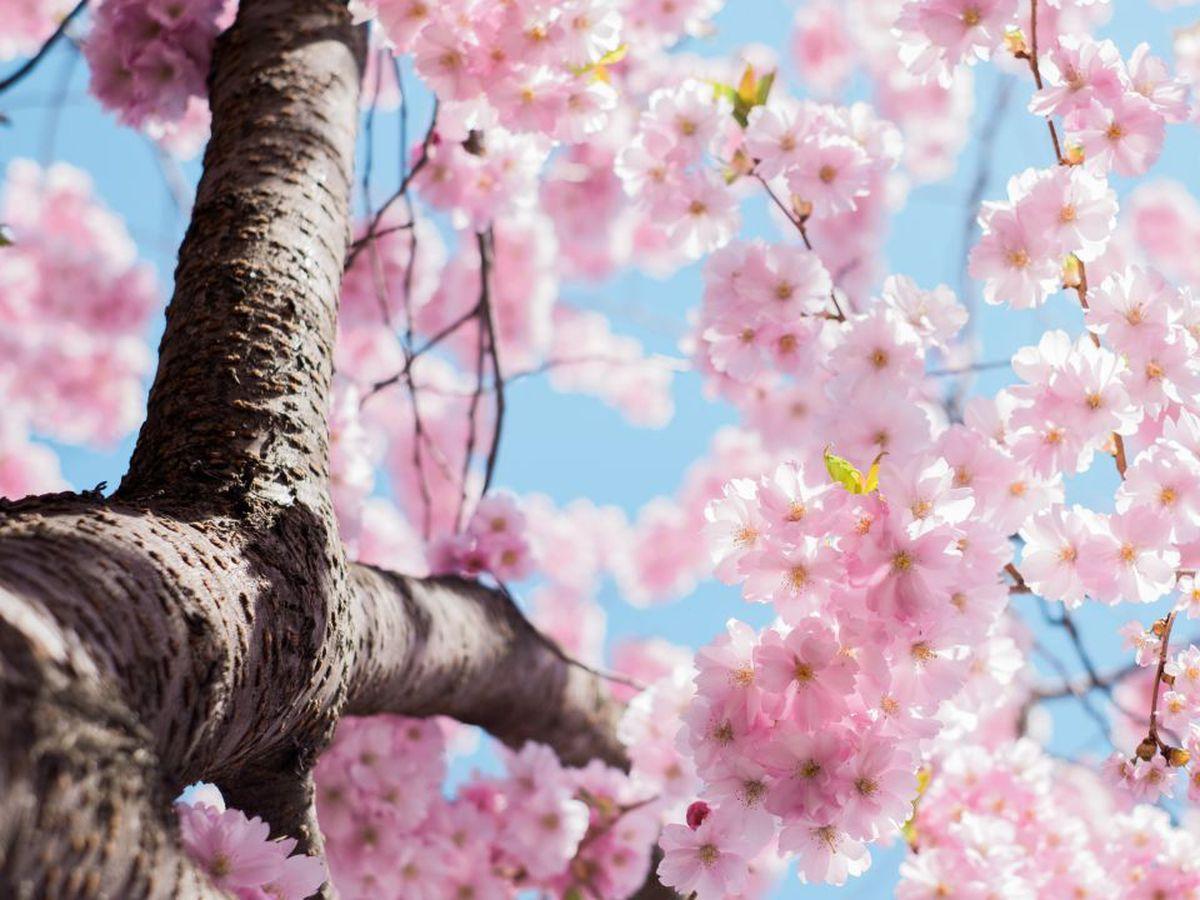 mira como estara el clima en esta primavera