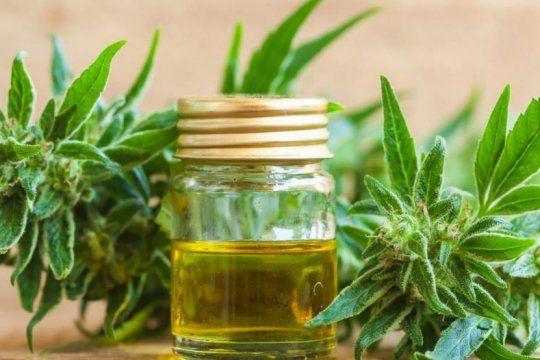 la anmat prohibio la venta y el uso de una crema curativa con aceite de cannabis