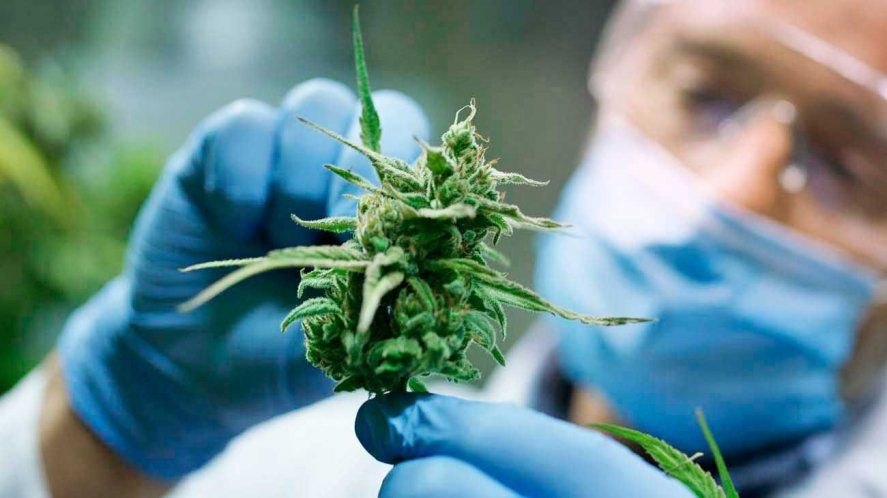 El cannabis medicinal es una industria que mueve millones cada año.