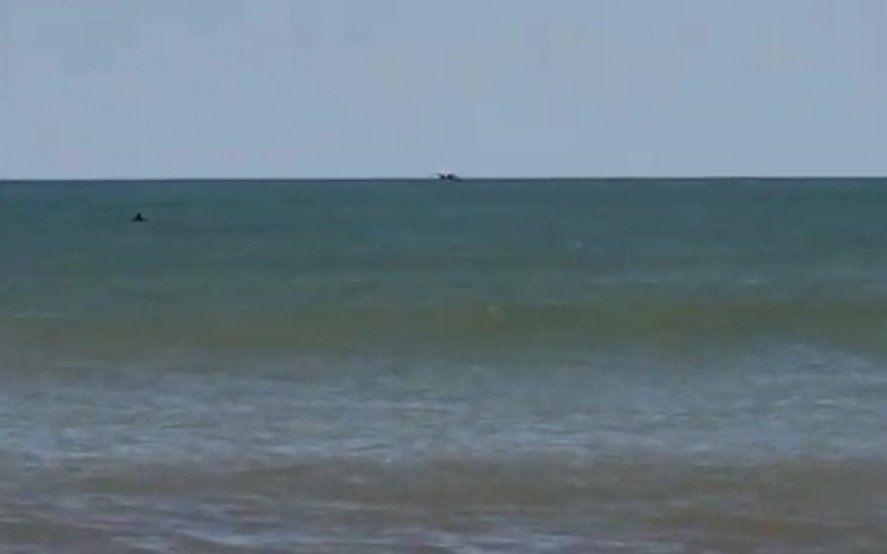 Video: turistas alarmados por la aparición de orcas en una de las playas de Mar del Plata