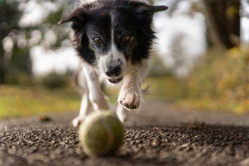 Entender el lenguaje de los perros puede evitar accidentes entre estos animales y las personas
