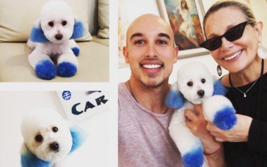 Polémica: Carmen Barbieri tiñó a su perro y recibió críticas en las redes