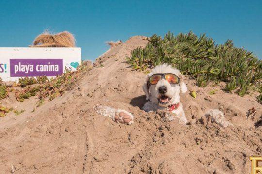 ellos tambien van a la playa: conoce el balneario de mar del plata disenado para perros