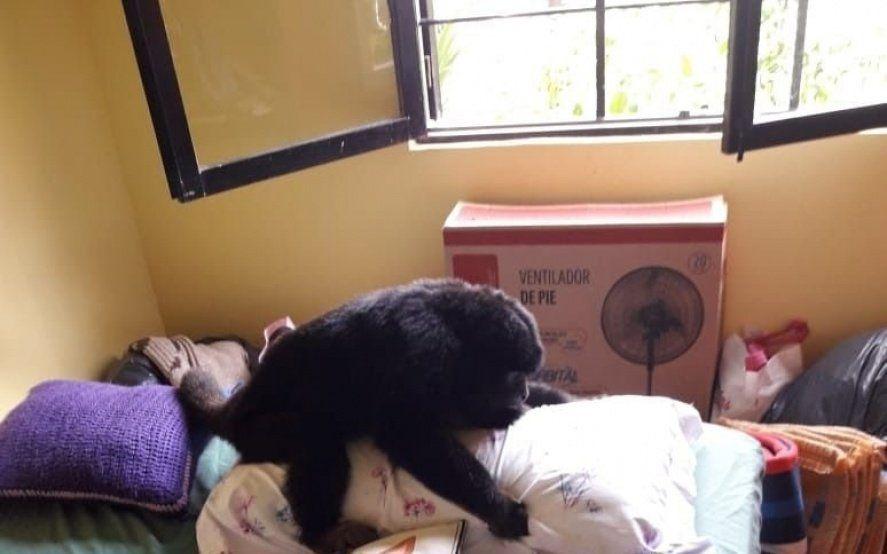 """Apareció el mono perdido en La Plata: una familia lo adoptó y lo bautizó """"Monono"""""""