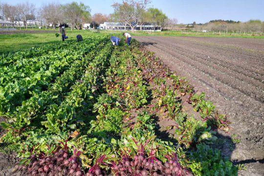 La cosecha de verduras fue en la Unidad 12 de Gorina