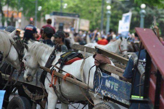 amplio rechazo de la justicia a la ordenanza que prohibia el uso de caballos a los carreros
