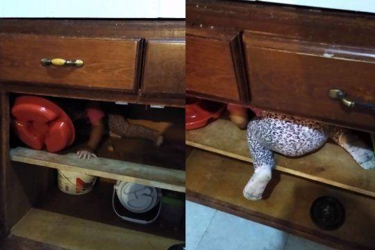 video viral: una nena jugaba adentro de la alacena y aparecio algo aterrador
