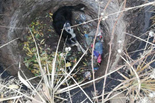 El perro había caído a un pozo de tres metros de prodfundidad (Foto: Bomberos de San Patricio)