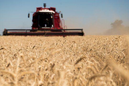 en exportaciones agroindustriales, el trigo bonaerense pisa fuerte en el mercado brasileno