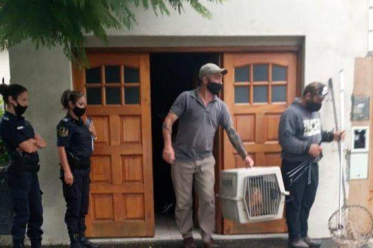 La Plata: rescataron al mono que merodeaba por la ciudad