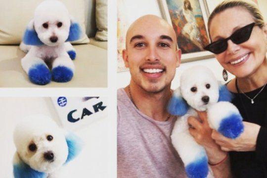 polemica: carmen barbieri tino a su perro y recibio criticas en las redes