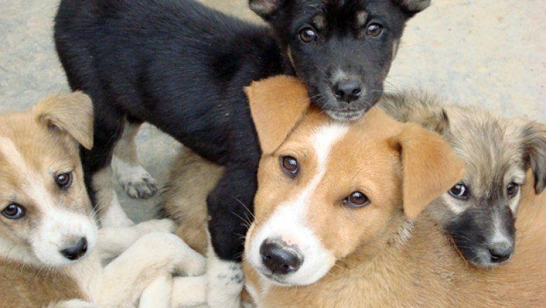Más de 1.200 mascotas fueron vacunadas contra la rabia durante la Semana del Animal