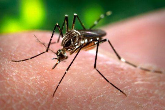 alerta dengue: enterate por que este mes se dara el pico de la enfermedad