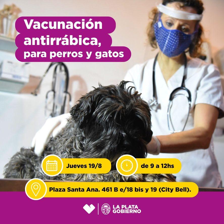 Perros y gatos recibirán la vacuna contra la rabia de forma gratuita